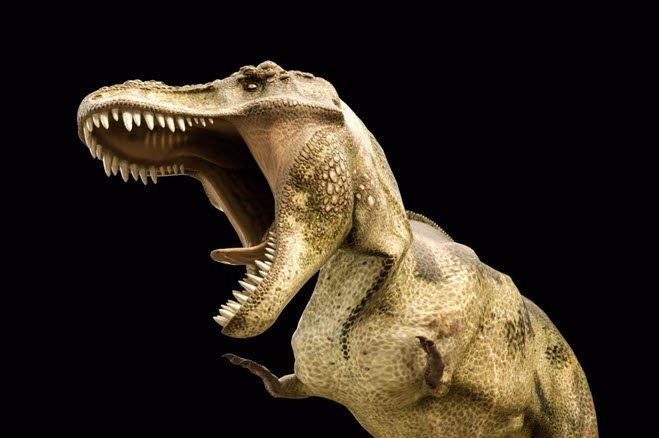 Quiz spørsmål og svar junior rex