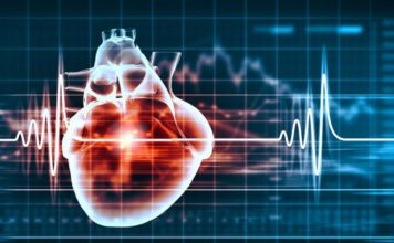 Vitenskap quiz 7 menneskets hjerte